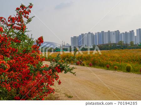 한국 경기도 인천시 계양구 서운동 계양꽃마루공원 70194285