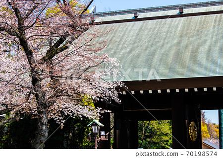 靖國神社(靖國神社和櫻花),東京 70198574