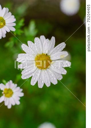 꽃 70204405