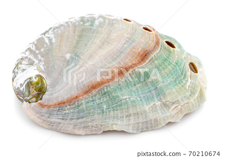 Sea shell an isolated on white background 70210674