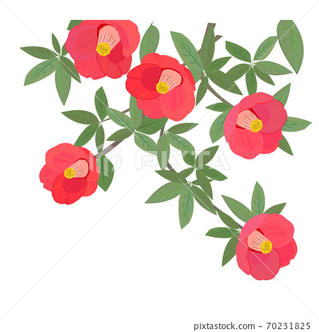 Camellia flower New Year 70231825