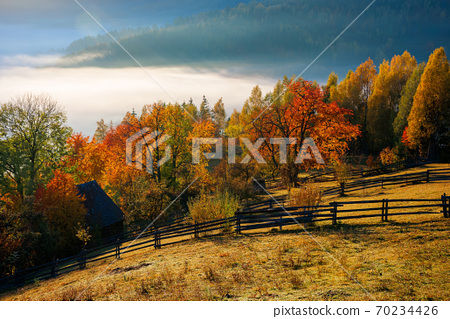 stunning rural landscape. foggy scenery at sunrise in autumn season. trees on mountain hills in colorful foliage. fence on the hillside 70234426