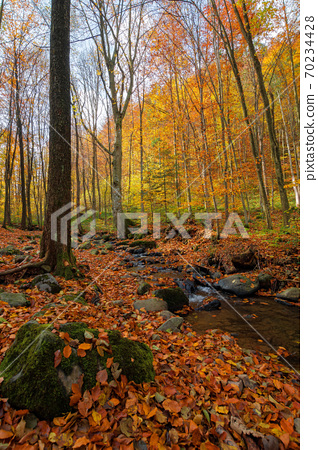 brook in the forest. wonderful nature scenery on a sunny autumnal day. trees in colorful foliage. water stream among the rocks and fallen leaves on the ground 70234428