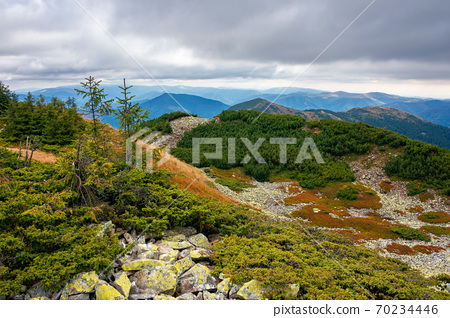 autumn scenery in high mountains. trees on the rocky slopes and hills. colorful nature scenery with cloudy sky above the distant ridge 70234446