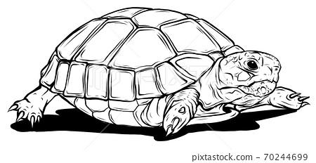 vector Turtle icon. Cartoon illustration of turtle vector icon for web 70244699