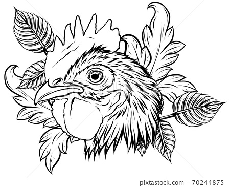 vector mascot of rooster head illustration design 70244875