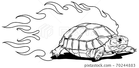 turtle isolated on white background vector illustration 70244883