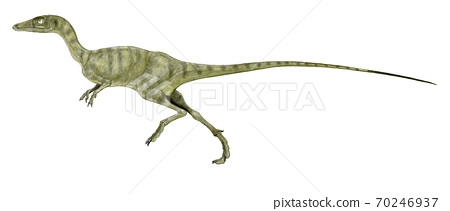 """Compsognathus """"Cute Jaw"""" A small carnivorous dinosaur beast of the late Jurassic period, primitive as a theropod. 70246937"""