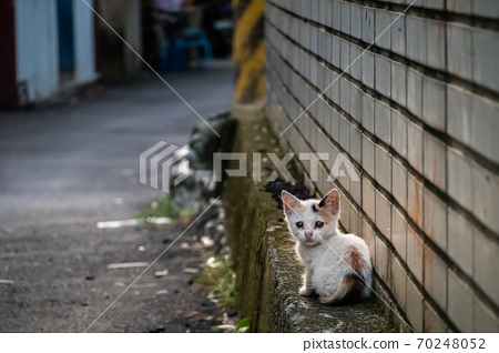 little stray cat sit at a street 70248052