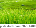 The terraced rice paddy in Bong Piang village Chiang mai Thailand 70251480