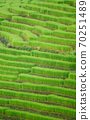 The terraced rice paddy in Bong Piang village Chiang mai Thailand 70251489