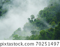 tropical forest with fog and mist 70251497