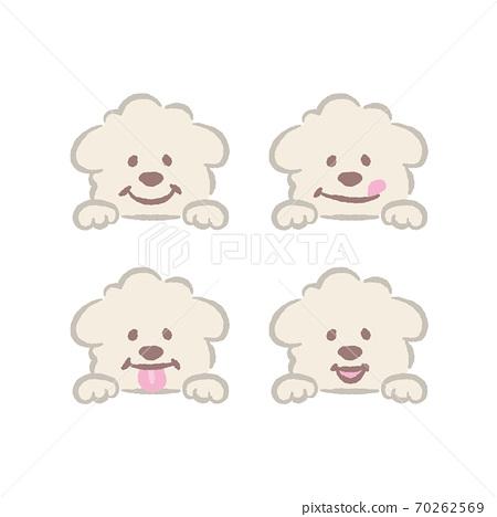 白色玩具貴賓犬的插圖 70262569