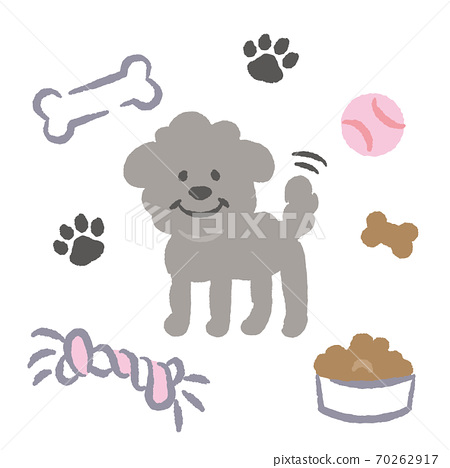 Gray toy poodle illustration 70262917