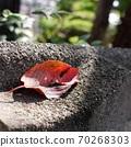 Fallen leaves on a block wall 70268303
