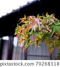 The beginning of autumn 70268318