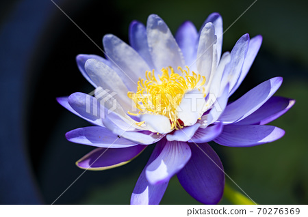 나바 나노 사토 가을의 꽃 70276369