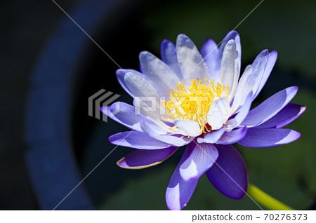 나바 나노 사토 가을의 꽃 70276373