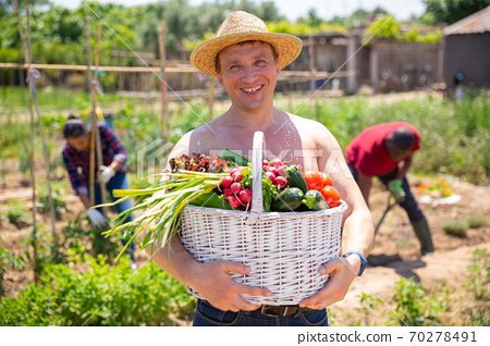 Happy farmer with basket of vegetables in the garden 70278491