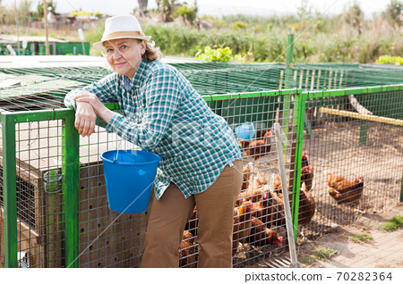 Mature woman feeding hens in a chicken coop 70282364