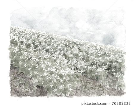 메밀 밭 풍경 푸른 하늘 메밀 꽃 흰 꽃 야채 꽃 자연 모노톤 【수묵화 풍의] 70285835