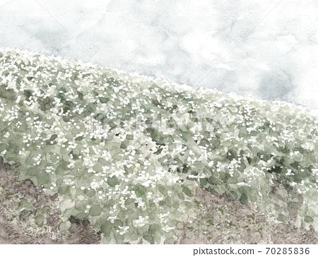 Soba field Landscape Blue sky Buckwheat flower White flower Vegetable flower Nature Monotone [ink painting style] 70285836