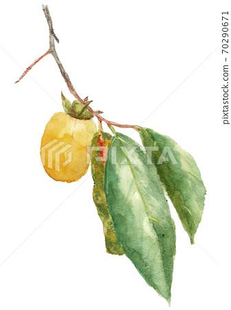 柿柿子柿子果實用樹枝和樹葉白色背景[水彩] 70290671