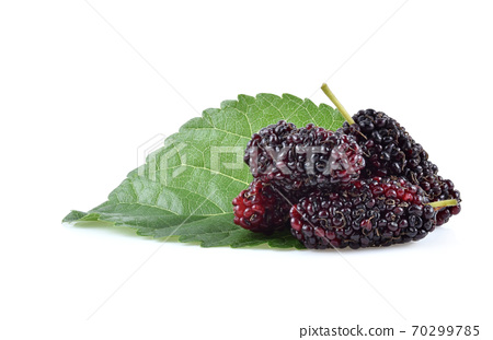 Mulberry isolated on white background 70299785