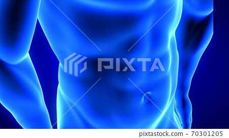 male fitness body transformation, abdominal muscles detail - muscle mass building illustration on blue background 70301205