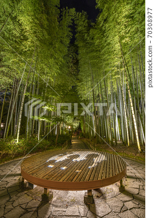 Shuzenji Onsen Bamboo Forest Path Illuminated 70308977