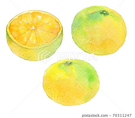 水彩插图食品柑橘早熟的橘子 70311247