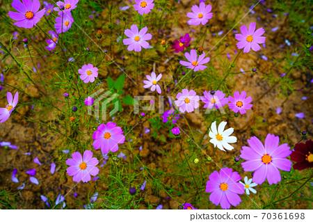 Anseong Farm Land, Gongdo-eup, Anseong-si, Gyeonggi-do, Korea 70361698