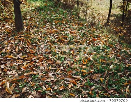 숲속의 가을 낙엽 배경  70370709