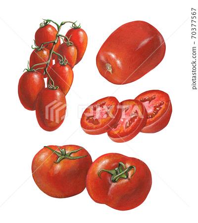 Different tomato varieties 70377567