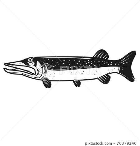 Pike fish icon isolated on white background. Design element for logo, label, emblem, sign. 70379240
