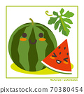 Information on harvesting with watermelon fruits 70380454
