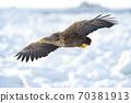 白尾飛過浮冰 70381913