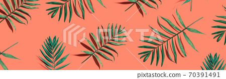 Tropical palm leaves from above 70391491