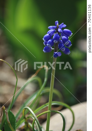 봉녕사 파란 꽃 70401136