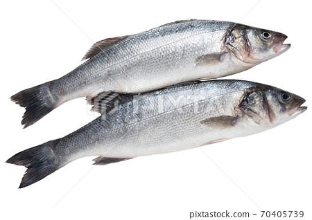 two silverfish seabass, on a white background, raw fresh fish 70405739