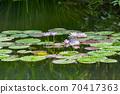 모네의 정원 70417363