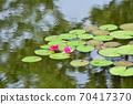모네의 정원 70417370
