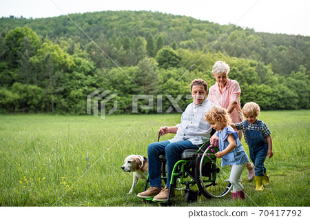 Small children with senior grandparents and dog on a walk on meadow in nature. 70417792