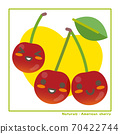 Information on harvesting with Nachuraru's American cherry fruit 70422744