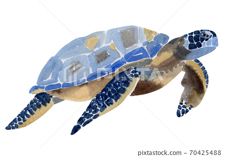 Handwork watercolor illustration of sea turtle in white background. 70425488