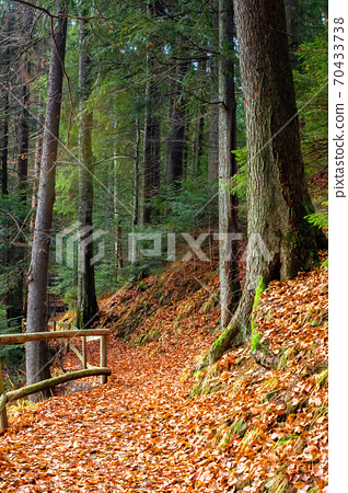 pathway through the forest. beautiful autumn scenery. wooden fence along the walkway covered in fallen foliage 70433738