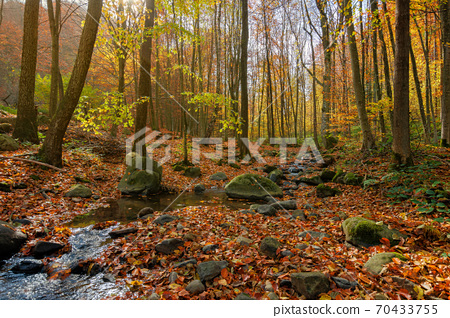 brook in the forest. wonderful nature scenery on a sunny autumnal day. trees in colorful foliage. water stream among the rocks and fallen leaves on the ground 70433755