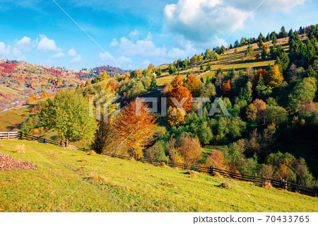 autumnal rural landscape in mountains. grass on the hill, trees in colorful foliage. beautiful nature scenery. sunny morning weather with fluffy clouds on the sky 70433765