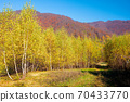 birch forest on the hill. beautiful autumn landscape of carpathian mountains. bright and vivid scenery in fall colors. sunny weather with fluffy clouds on the sky 70433770