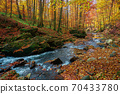 mountain stream in autumn forest. water flow among the rocks. trees in colorful foliage. sunny weather in the morning. beautiful nature scenery 70433780